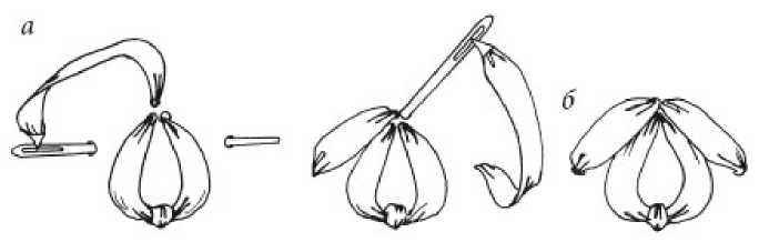 Петелька с прикрепкой и с прямым стежком лентами